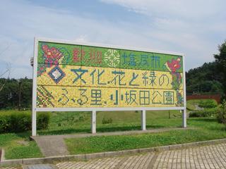 小坂田公園2